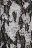 Brun tileable textur av det gamla trädet Sömlös bakgrund för trädskäll royaltyfri fotografi