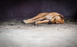 Brun tillfällig blandningavelhund som sover på golvet royaltyfria foton