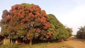 Brun vert d'arbres photos stock