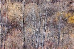 Brun vinterskog med kala träd Royaltyfri Fotografi