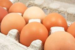 bruna ägg Royaltyfri Foto