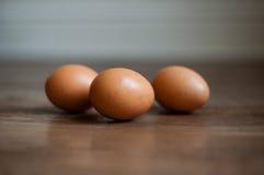 3 bruna ägg Royaltyfria Bilder