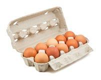 bruna ägg för ask Arkivbilder