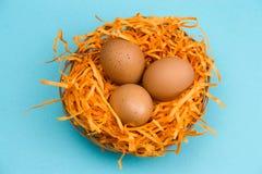 bruna ägg i ett dekorativt rede på en vibrerande blå bakgrund royaltyfri bild
