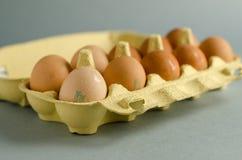 12 bruna ägg i gul äggspjällåda Royaltyfria Bilder