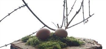 Bruna ägg på gröna mu med filialen Royaltyfri Bild