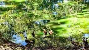 Bruna fåglar Royaltyfria Foton