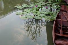 Bruna fartyg svävar i dammet med purpurfärgat blomma för lotusblommablommor Fotografering för Bildbyråer