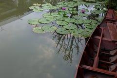 Bruna fartyg svävar i dammet med purpurfärgat blomma för lotusblommablommor Arkivfoton