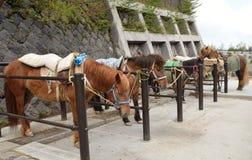 Bruna hästar i ett stall Royaltyfri Bild
