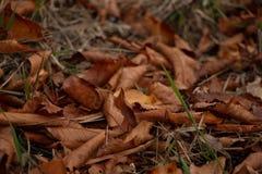 Bruna höstsidor på jordningen arkivfoto