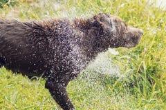 Bruna hundskakor Royaltyfri Fotografi