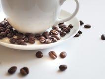 Bruna kaffebönor i en vit kopp Fotografering för Bildbyråer