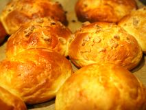 Bruna muffin utan socker bakade i ugnen Royaltyfria Bilder