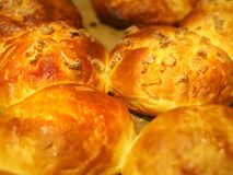 Bruna muffin utan socker bakade i ugnen Arkivfoto