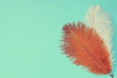 Bruna och vita fjädrar Arkivbild
