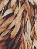 Bruna sidabrisar arkivfoton