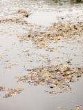 Bruna stupade höstsidor som överst samlar av grå mulen lak Royaltyfria Foton