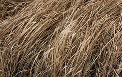Bruna torra gräs i sommarsäsong Royaltyfria Bilder