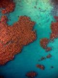 Brunalg bäddar ned från himlen/från ovannämnt/från luften Arkivfoto