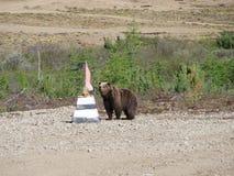 Brunbjörn Fotografering för Bildbyråer