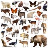 Brunbjörn och andra asiatiska djur Isolerat på vit Arkivfoto
