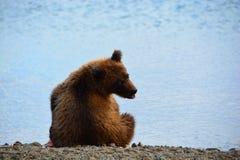 Brunbjörn som vilar på kusten av sjön kamchatka Royaltyfri Fotografi