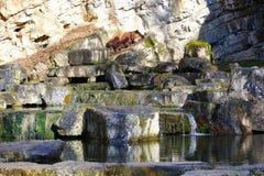 Brunbjörnen som sover på, vaggar landskap på sjön royaltyfri fotografi