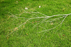 Brunch asciutto su erba verde Immagine Stock Libera da Diritti