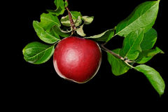Brunch con le mele. Fotografia Stock Libera da Diritti