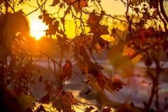 Brunch d'arbre sur le fond du soleil Photographie stock libre de droits