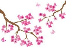 Brunch de la cereza Fotografía de archivo libre de regalías