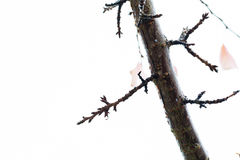 Brunch de la cereza y hojas restantes en el otoño 2 Foto de archivo