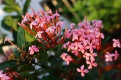 Brunch de la flor Foto de archivo