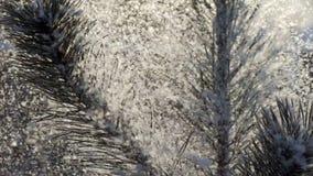 Brunch de sapin sous la neige clips vidéos