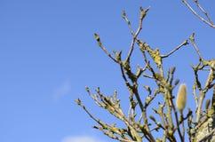 Brunch del árbol Foto de archivo