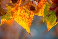Brunch del árbol en fondo del sol Imagen de archivo libre de regalías