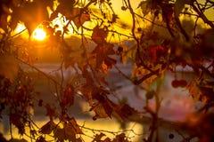 Brunch del árbol en fondo del sol Fotografía de archivo libre de regalías