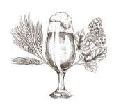 Brunch del luppolo ed illustrazione di vettore del calice della birra royalty illustrazione gratis