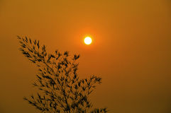 Brunch del árbol en la puesta del sol sobre el cielo colorido Fotografía de archivo libre de regalías