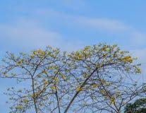 Brunch dell'albero Fotografie Stock Libere da Diritti