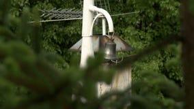 Brunch dell'albero della pelliccia sulla vista cambiante del fuoco di giorno ventoso video d archivio