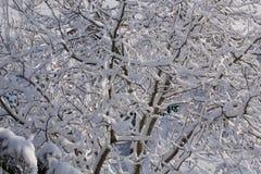 brunch dell'albero sotto neve Fotografie Stock
