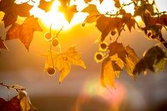 Brunch dell'albero sul fondo del sole Immagini Stock Libere da Diritti