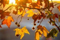 Brunch dell'albero sul fondo del sole Immagine Stock