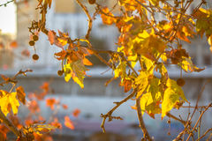 Brunch dell'albero sul fondo del sole Fotografie Stock