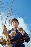 Brunch dell'albicocca della potatura del giardiniere Immagini Stock Libere da Diritti