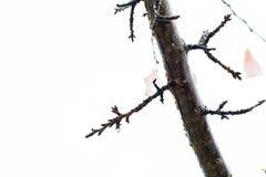 Brunch della ciliegia e foglie rimanenti in autunno 2 Fotografia Stock