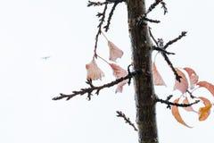 Brunch della ciliegia e foglie rimanenti in autunno 4 Immagine Stock Libera da Diritti