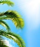Brunch della palma con il cielo Immagine Stock